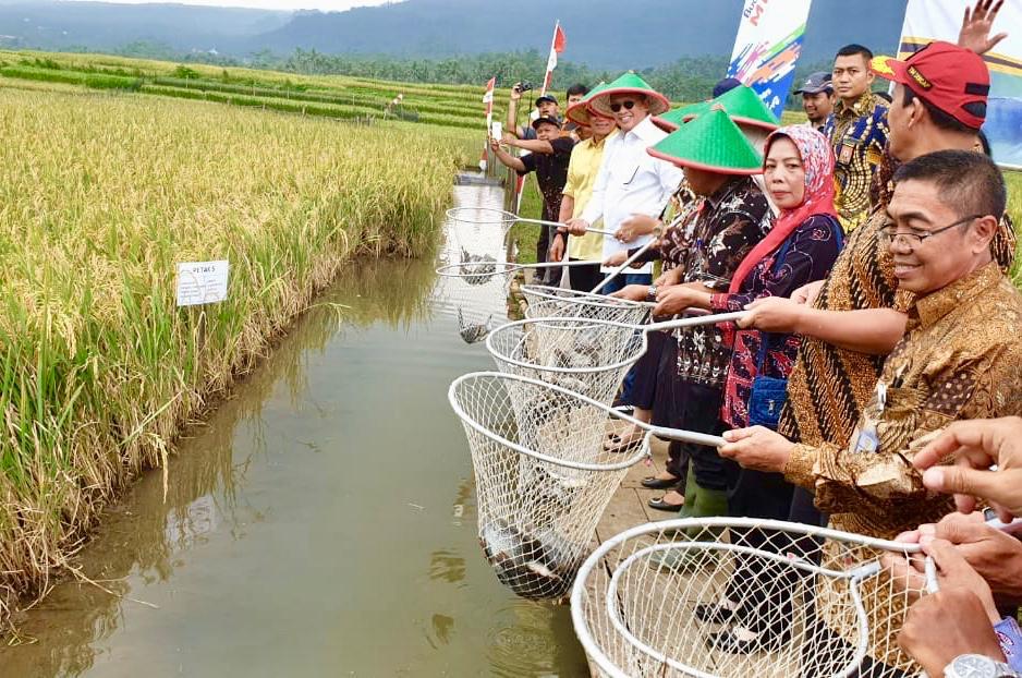 Bamsoet Panen Raya Ikan Nila dan Serahkan Bantuan Perikanan